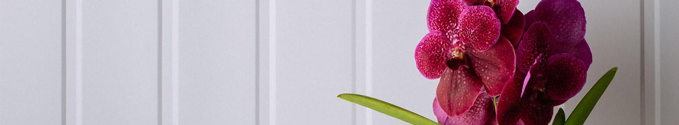 Orquídeas Vandas.
